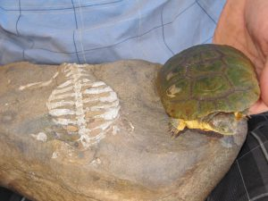 old turtle new turtle