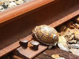 box turtle train tracks