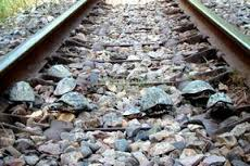 turtles on the track