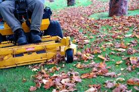 mulching your leaves into your lawn helps control weeds and adds nutrients