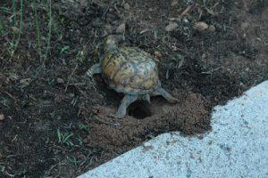 digging-hole