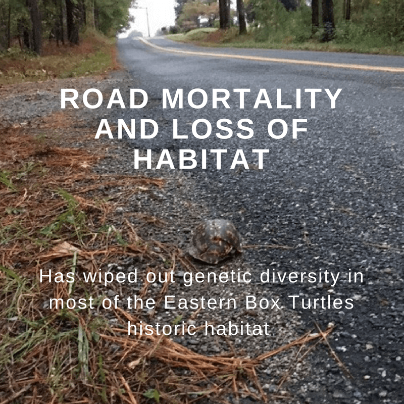 Road Mortality