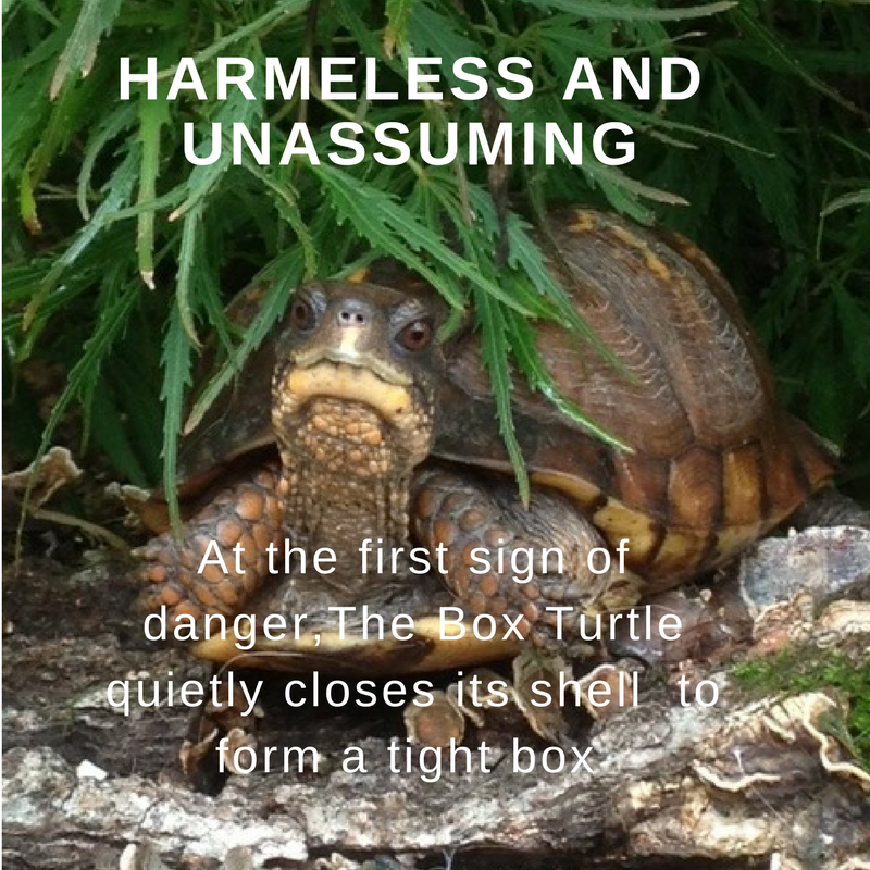harmless and unassuming